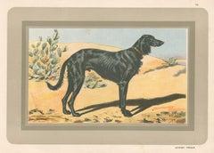 Persian Greyhound or Saluki , French hound, dog chromolithograph, 1930s
