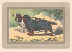 Black Spaniel , French hound, dog chromolithograph, 1930s