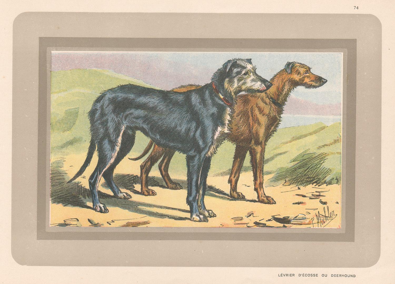 Deerhound, dog chromolithograph, 1930s