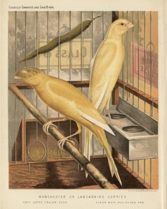 Manchester or Lancashire Coppies, antique canary chromolithograph print, 1880