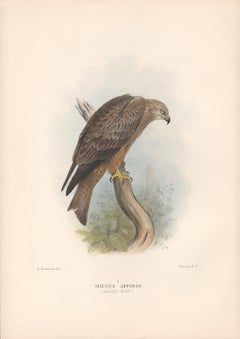 Allied Kite, Bird of Prey, lithograph with hand-colouring, c1915