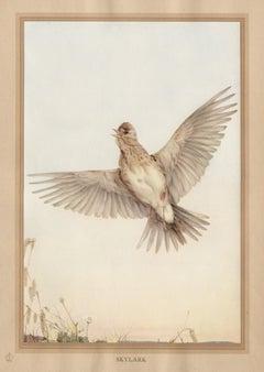 'Skylark', English bird print after Edward Detmold, circa 1919
