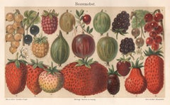 'Beerenobst' (Berries), antique German fruit botanical chromolithograph print