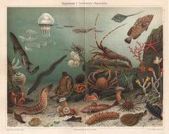 Aquarium, antique German sea life chromolithograph print