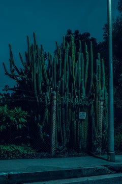 Midnight Moonlight Cactus - Tom Blachford