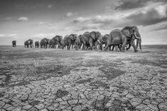 Elephants On Cracked Soil - AP1 - Large Size