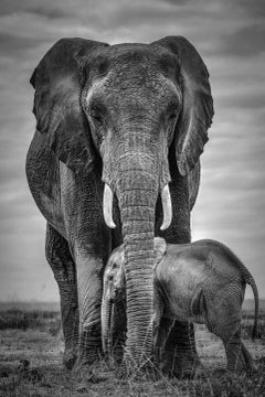 Protection - Mother and Baby Elephant - Edition of 8 - Large