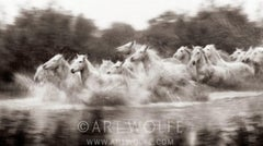 Power and Grace - Limited Edition of 100 - Horses of Camargue - Art Wolfe