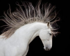 Spirit Horse - Andalusian White Horse