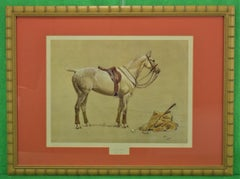 Cecil Aldin 'Activity' Polo Pony Hand- Colour Plate