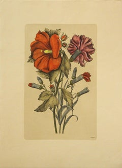 (Title Unknown)-Botanical Print. Printed in Italy.