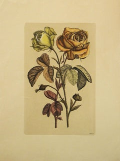 (Title Unknown)-Botanical Print. Printed in Italy