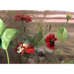 """""""Zinnia Elegans""""  (Red) Flower in Time Lapse Contemporary  Photography"""