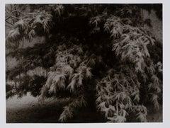 Hideoki, Black & White Photography, Snow Covered Tree, Japan, 1978
