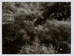 Hideoki, Black & White Photography, Blurred, USA, 1970