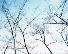 Between the Sea and the Mountain –Kumano 14,DK-430 –Risaku Suzuki, Nature, Tree