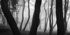 SNM5a-003h – Bae, Bien-U, Photography, Landscape, Art, Nature, Pine Tree, Forest