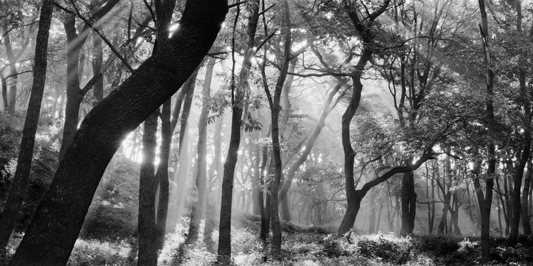 Bae Bien-u Black and White Photograph - SNM5A-031H – Bien-U BAE, Photography, Landscape, Nature, Tree, Forest, Light