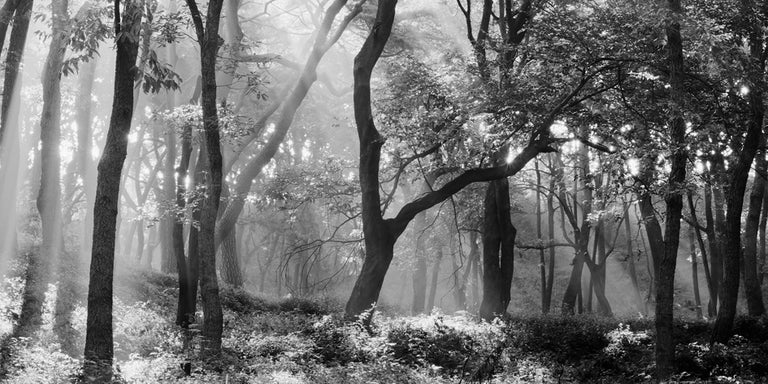 SNM5A-031H – Bien-U BAE, Photography, Landscape, Nature, Tree, Forest, Light - Black Black and White Photograph by Bae Bien-u