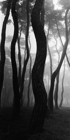 SNM1A-018V – Bien-U BAE, Photography, Landscape, Nature, Tree, Forest, Light