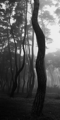 SNM1A-052V – Bien-U BAE, Photography, Landscape, Nature, Tree, Forest, Light