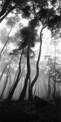 SNM1A-079V – Bien-U BAE, Photography, Landscape, Nature, Tree, Forest, Light