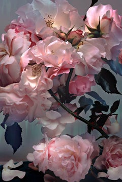 Rose – Nick Knight, Photography, Pink, Rose, Flower, Art, Light, Contemporary