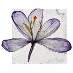 We Passed The Setting Sun – Brigitte Lustenberger, Flower, Still Life, Flora