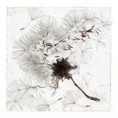 An Apparition Of Memory – Brigitte Lustenberger, Flower, Still Life, Flora, Art