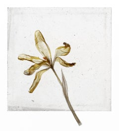 Is There Nothing After Flowers – Brigitte Lustenberger, Flower, Still Life, Art