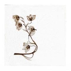 These Tears Had Never Flowed – Brigitte Lustenberger, Flower, Still Life, Art