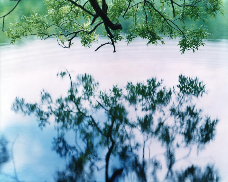 Water Mirror 17, WM-758 – Risaku Suzuki, Nature, Tree, Japanese, Reflection - Photograph by Risaku Suzuki
