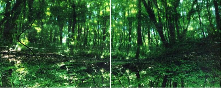 Water Mirror 17, WM-788,787 (diptych) – Risaku Suzuki, Forest, Water, Reflection - Photograph by Risaku Suzuki