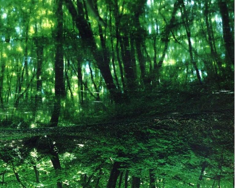 Water Mirror 17, WM-788,787 (diptych) – Risaku Suzuki, Forest, Water, Reflection - Contemporary Photograph by Risaku Suzuki