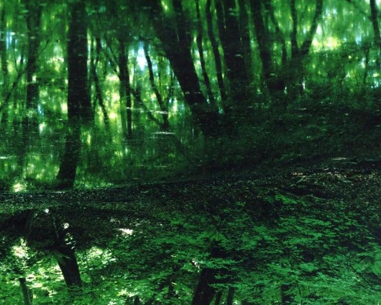 Water Mirror 17, WM-788,787 (diptych) – Risaku Suzuki, Forest, Water, Reflection - Green Color Photograph by Risaku Suzuki