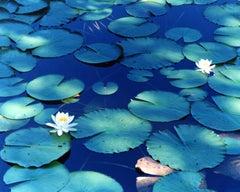 Water Mirror 16, WM-628 – Risaku Suzuki, Nature, Tree, Water, Mirror, Water Lily