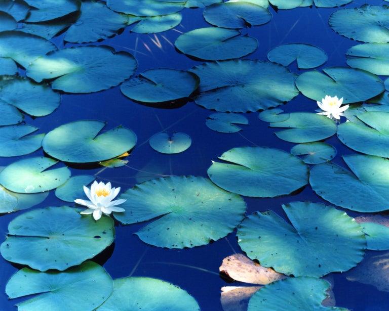 Water Mirror 16, WM-628 – Risaku Suzuki, Nature, Tree, Water, Mirror, Water Lily - Photograph by Risaku Suzuki