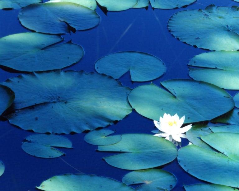 Water Mirror 16, WM-628 – Risaku Suzuki, Nature, Tree, Water, Mirror, Water Lily - Contemporary Photograph by Risaku Suzuki