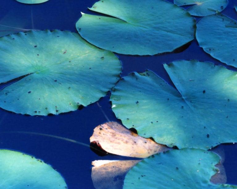 Water Mirror 16, WM-628 – Risaku Suzuki, Nature, Tree, Water, Mirror, Water Lily - Blue Color Photograph by Risaku Suzuki