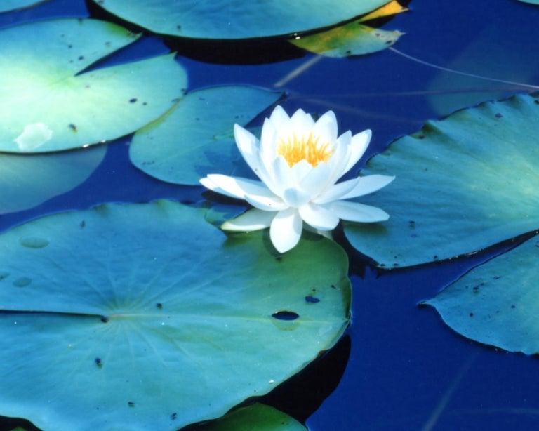 Water Mirror 16, WM-628 – Risaku Suzuki, Nature, Tree, Water, Mirror, Water Lily For Sale 1