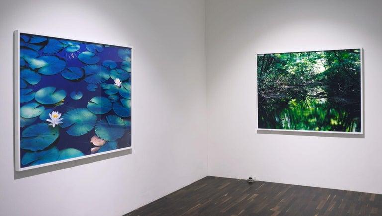 Water Mirror 16, WM-628 – Risaku Suzuki, Nature, Tree, Water, Mirror, Water Lily For Sale 2