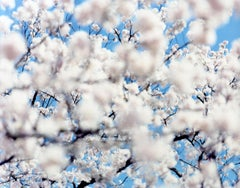 SAKURA 07,S-49 – Risaku Suzuki, Nature, Spring, Cherry Blossom, Japan, Sakura