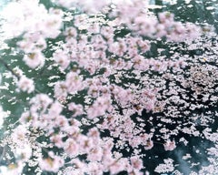 SAKURA 16,4-11 – Risaku Suzuki, Nature, Tree, Sky, Spring, Cherry Blossom, Art