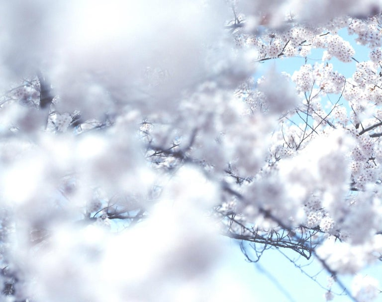 SAKURA 10,4-66 – Risaku Suzuki, Nature, Tree, Sky, Spring, Cherry Blossom, Art - Contemporary Photograph by Risaku Suzuki