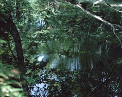 Water Mirror 14,WM-61 – Risaku Suzuki, Nature, Tree, Water, Mirror, Reflection