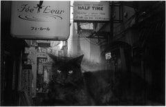 WARNING #41  – Kosuke, Photography, Art, Abstract, Black and White, Cat, Night