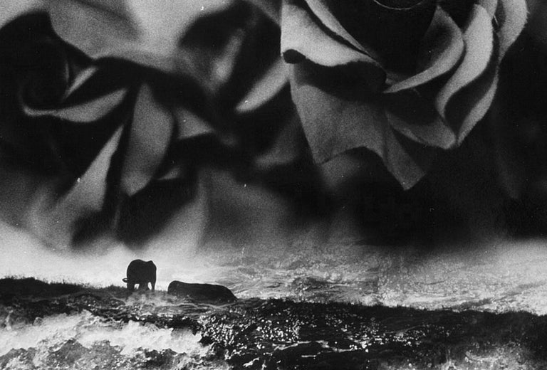 WARNING #31 – Kosuke, Photography, Art, Abstract, Black and White, Black Roses For Sale 1