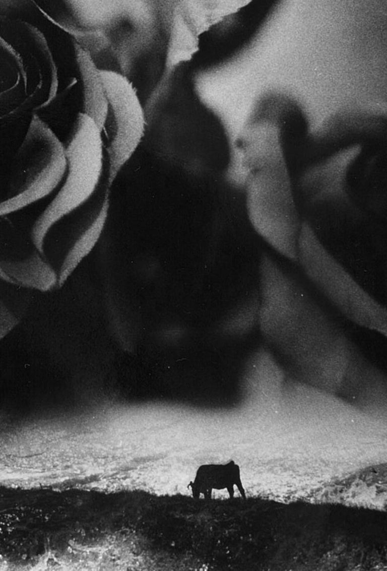 WARNING #31 – Kosuke, Photography, Art, Abstract, Black and White, Black Roses For Sale 2