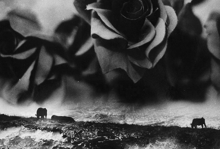WARNING #31 – Kosuke, Photography, Art, Abstract, Black and White, Black Roses For Sale 3