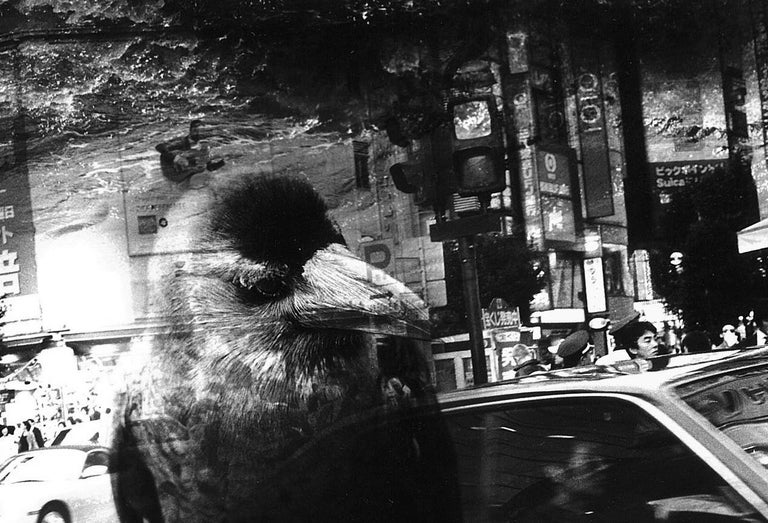 WARNING #26  – Kosuke, Photography, Art, Abstract, Black and White, Bird, Street For Sale 1